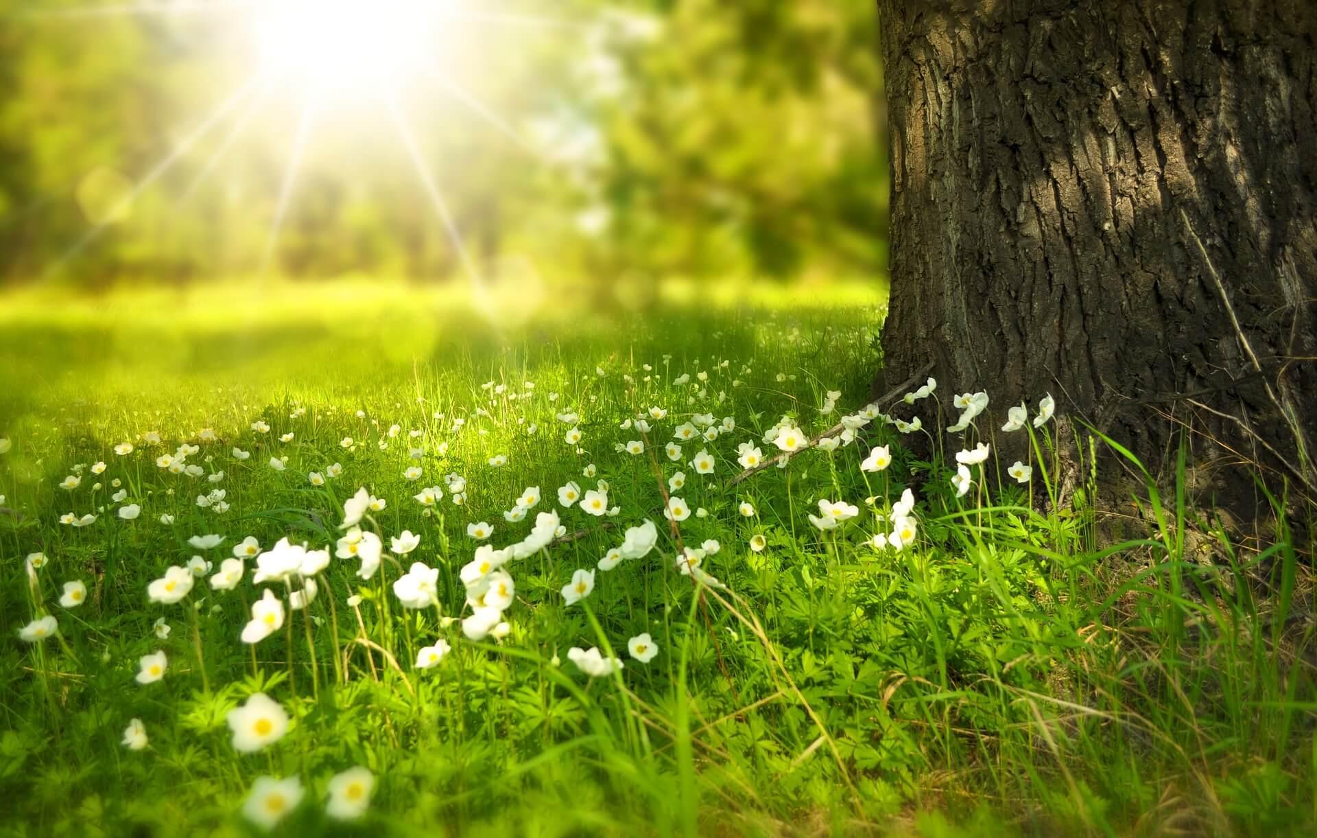 Poiana florilor