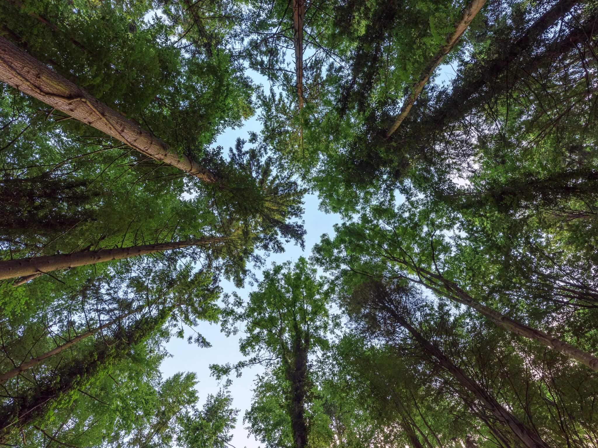 britishforest-696483208-1